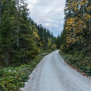 Forstweg am Bach entlang